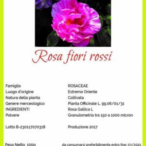 rosa fiori rossi michele rinaldi